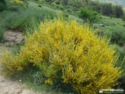 Chorro,Chorrera San Mamés_Valle del Lozoya;valle de oza montes aquilianos international days sajamb